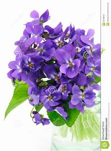 Violet flowers stock image. Image of arrangement, blue ...