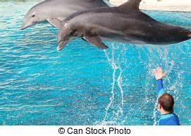 Schöne Delfin Bilder : sch ne delfin sonnenuntergang springende stockfotografie suche bilder und foto ~ Frokenaadalensverden.com Haus und Dekorationen