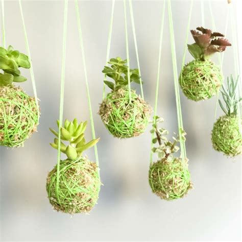 ideas for planting succulents 47 succulent planting ideas with tutorials succulent garden ideas page 2 of 4 balcony