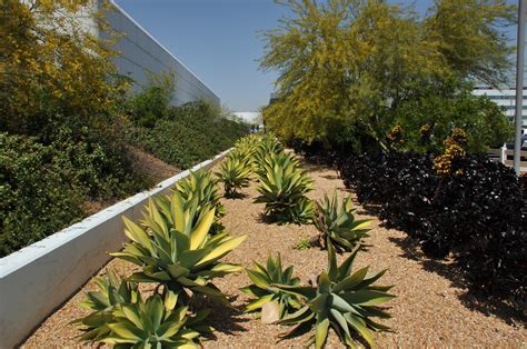 xeriscaping los angeles photos