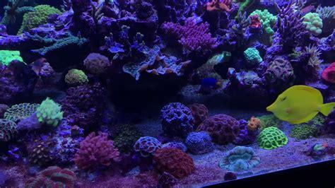 1100 L Raumteiler Fauna Marin Sps Lps Reeftank Meerwasser