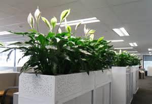 Wall Trough Planter by Portfolio Gallery Gaddys Indoor Plant Hire