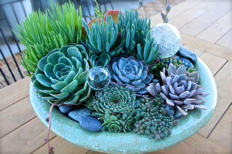 Delicious Succulents   House Delicious