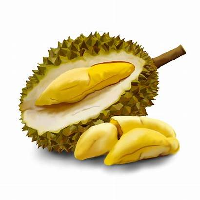 Durian Fruit Gambar Clipart Buah Cartoon Clip