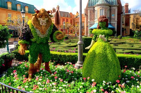 the epcot international flower garden festival begins