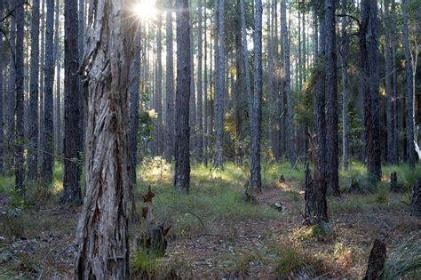 stock photo  landscape  forest  sunlight