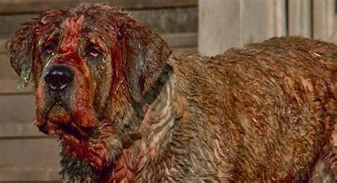 canine film festival    famous  dogs celebritydogwatchercom
