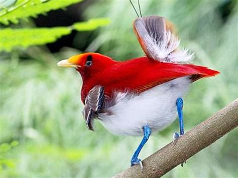 bird of paradise wedding flowers bird of paradise wallpaper