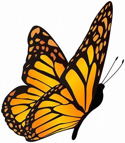 Butterfly Yellow Orange Clipart Butterflies Border Yopriceville