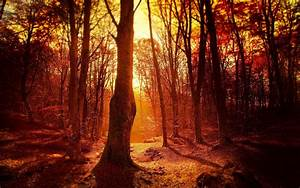 Fall, Sunset, Forest, Trees, Wallpapers, Hd, Desktop, And, Mobile, Backgrounds