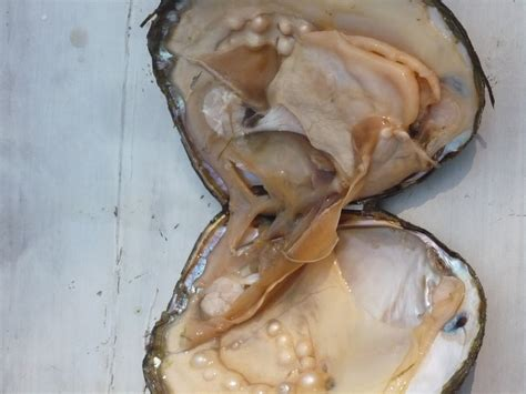 Oysters & Mollusks & Pearls, Oh My!