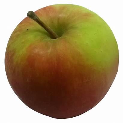 Apples Crown Apple Bramley Gold Varieties English