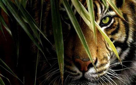 Tigers Wallpapers Wallpaper Cave