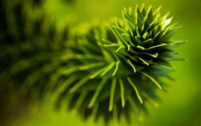 Plant Plants Nature Wallpapers Desktop Background Leaves