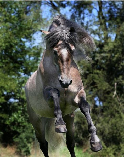 horses horse andalusian animals friesian dressage dogs