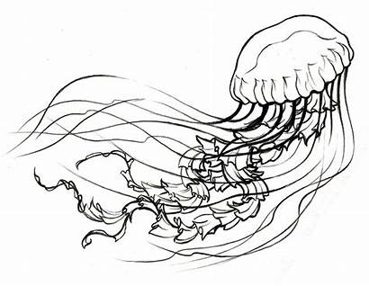 Jellyfish Drawing Tattoo Sketch Simple Fish Outline