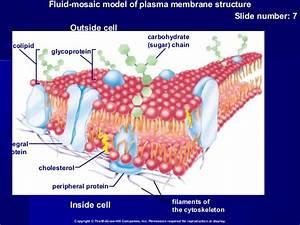 Membrane Structure