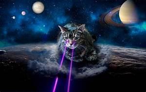 Image Gallery lazer cat