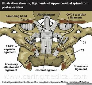 Ligament Between Atlas And Axis And Occipital Bone Of The
