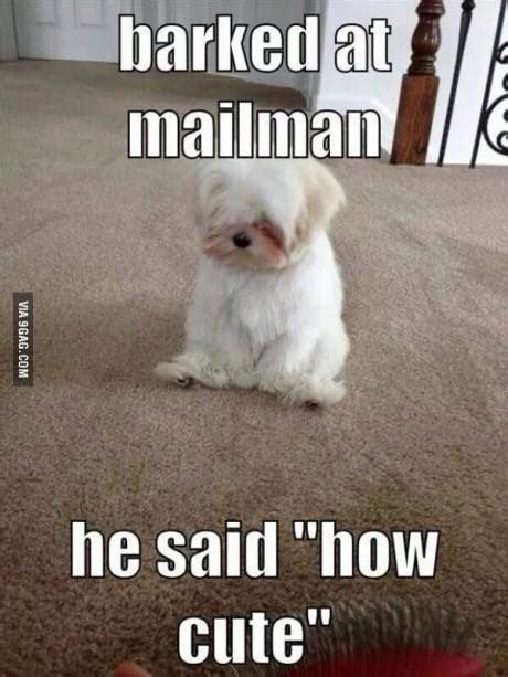 Adorable Meme - top 30 funny animal memes and quotes quotes and humor