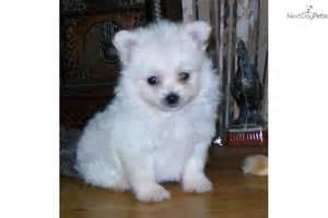 small low maintenance dogs for sale dog breeds picture