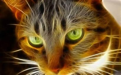 Cat Cool Animal Desktop Wallawy