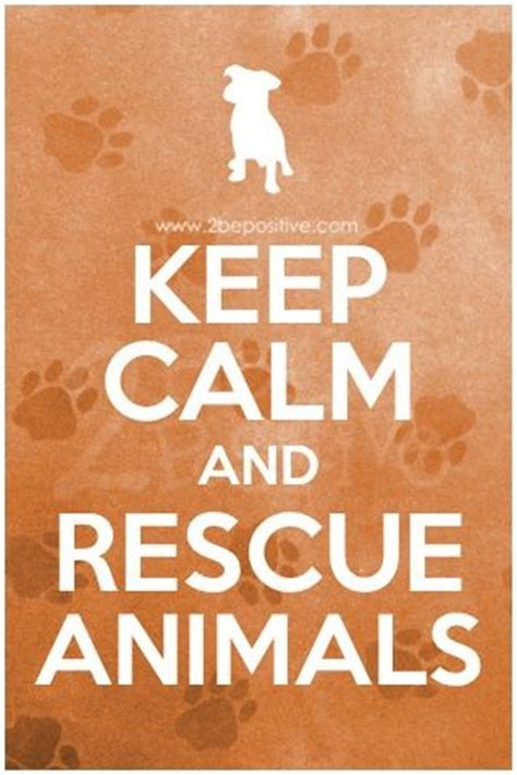 Animal Rescue Wallpaper - 17 best images about animal shelter on