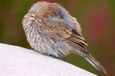 where do wild birds go at night