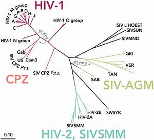 Subtypes Of Hiv