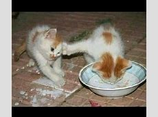 Recopilación de los gatitos más tiernos y graciosos Mascotas