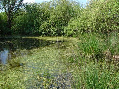 litovelske pomoravi protected landscape area wikipedia