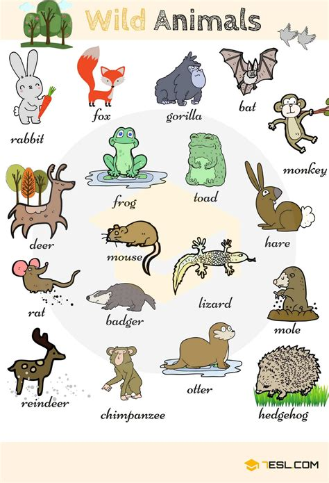 Wild Animal Vocabulary In English  Estudiar  Pinterest  Wild Animals, Wildlife And Learning
