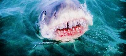 Shark Jaws Sharks Film Attack Gifs Rule