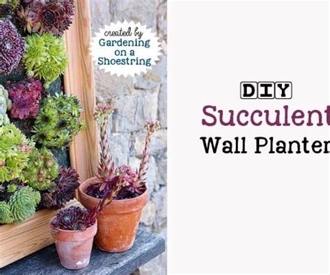 best 25 succulent wall planter ideas on