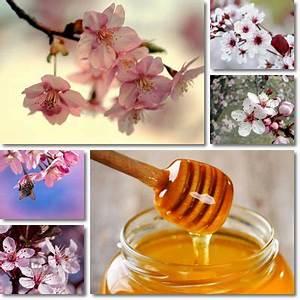 Miele Primavera Spülmaschine : miele di fiori di ciliegio vitamine proteine ~ Michelbontemps.com Haus und Dekorationen