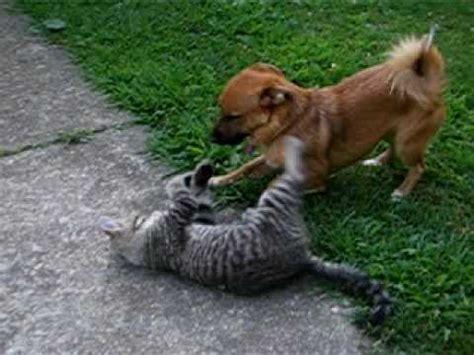 dog fighting cat deathmatch youtube