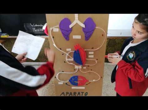 el aparato circulatorio youtube