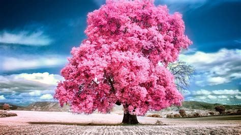 Pink Animated Wallpaper - pink nature wallpaper 53 images