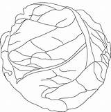Cabbage Coloring Pages Lettuce Drawing Template Colouring Printable Fresh Getcolorings Sketch Templates Leaf Getdrawings Vegetable Carrot Popular sketch template