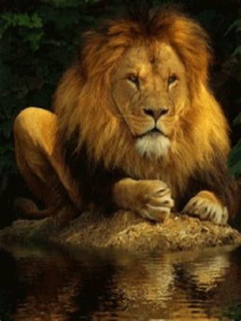 life marketplace lion water reflection animated