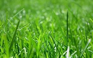 What's New | Blue Grass Nursery & Garden Centre | Calgary