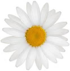 flower clip white png clipart best web clipart