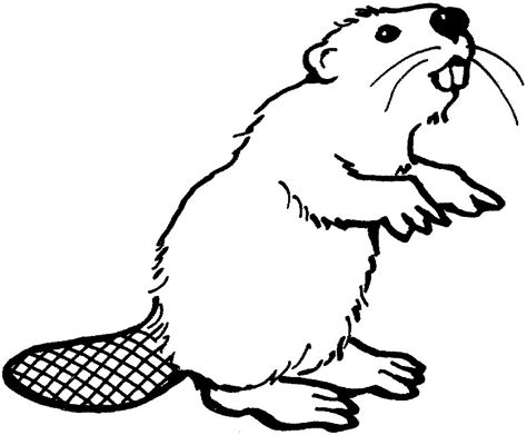 Beaver Clip Beaver Cliparts