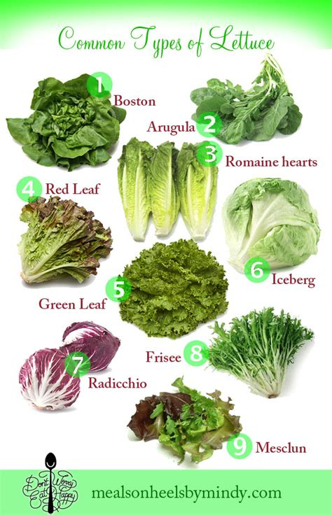 kinds of lettuce greens don t worry eat happy a list of common lettuce varieties