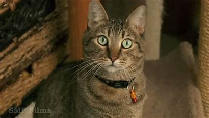 Mean Cat Kitty Williams Animation Cats Cory