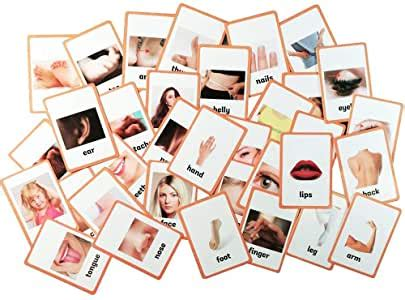 amazoncom body parts educational  picture reading