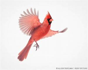 1000+ images about Birds in flight on Pinterest | Blue ...