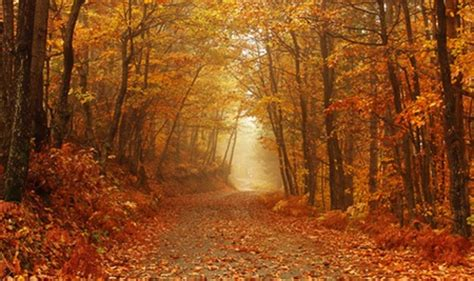 autumn path forests nature background wallpapers