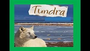 Tundra Define Habitat For Kids Pokemon Go Search For