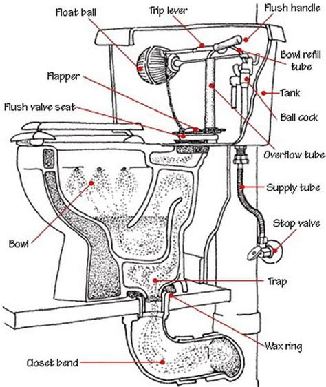 toilet is not clogged but drains and does not